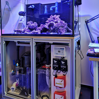 Setting up a reef tank - the 7 biggest mistakes