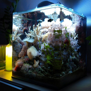 Tipps for stocking a nano reef tank