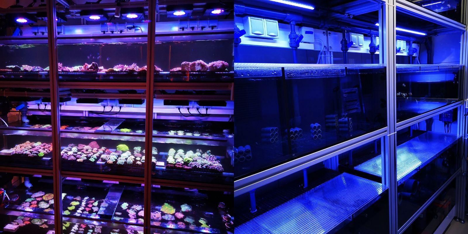 Quarantänebereich Fische und Korallen Coralaxy