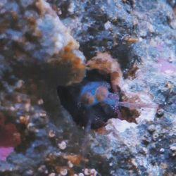 """😋 Snack-Time! . Schrecki hat heute einen kleines Stück Shrimp zum Mittag bekommen. Habe versucht sie (ja, wir glauben es ist eine """"Sie"""") etwas aus ihrer Höhle zu locken. Wie ihr seht, hat das für einen kurzen Moment auch geklappt 😄 . Schrecki ist vor 4 Monaten als blinder Passagier..."""