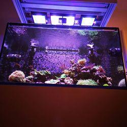 Update #officereeftank . Nicht unbedingt das Aquarium, das die meiste Aufmerksamkeit von uns bekommt. Aber gestern wurde es mal wieder geputzt 😄 . ➡️ Unser Büro-Aquarium läuft mit künstlichem Lebendgestein. Bei diesem handelt es sich um fossiles Riffgestein aus Aragonit, das an Land gewonnen und...