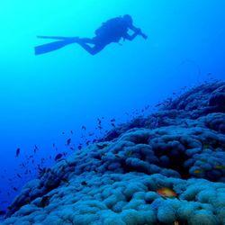 Jo ist von seinem Sudan-Trip zurück und hat schöne Bilder mitgebracht 😍 Seinen Tauchanzug hatte er ganz umsonst mitgenommen, denn bei 34°C Wassertemperatur hat die Badehose gereicht 😄 . Die Korallen am Sanganeb Atoll sind hart im Nehmen. Neben den hohen Temperaturen, liegt der Salzgehalt nämlich...