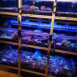 💥 Unsere Korallen-Quarantäne platzt aus allen Nähten 💥 . Wir haben letzte Woche ein wunderschönes privates Aquarium aufgelöst und den kompletten Besatz zu uns in die Anlage genommen. Der Besitzer hat zugunsten eines neuen Projektes das Aquarium nur schweren Herzens aufgegeben. 💔 Das Riffbecken...