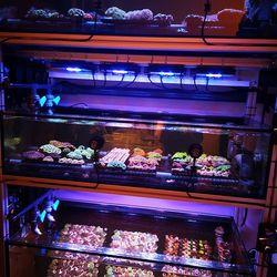 🍭Welcome to the Candyshop #coralaxyfarm 😋 . . . #reefcandy #coralcandy #eatsleepreef #reefersdaily #reefpackworldwide #allmymoneygoestocorals #meerwasseraquarium #coralfarming #aquaculturedmarinelife