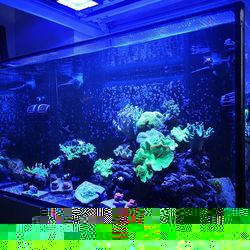 Unser Büro-Aquarium . Definitiv das Aquarium, das am wenigsten Aufmerksamkeit von uns bekommt. Eigentlich haben wir schon seit Wochen vor es umzugestalten und einiges an Weichkorallen mit Steinkorallen zu tauschen, aber wie das so ist: andere Sachen sind gerade wichtiger. Apropos: Wann war...
